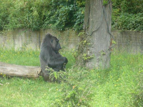 Zoologischer Garten (Berlin Zoo) : He was born is 1957