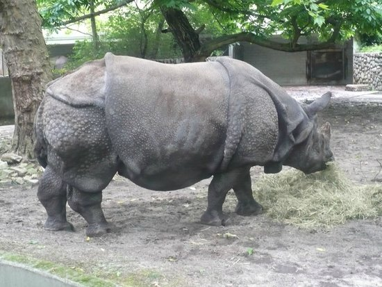 Zoologischer Garten (Berlin Zoo) : Asian Rhino