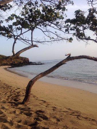 ClubHotel Riu Bachata: The beach