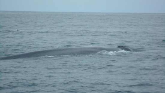 Dana Point, Californien: Blue Whale