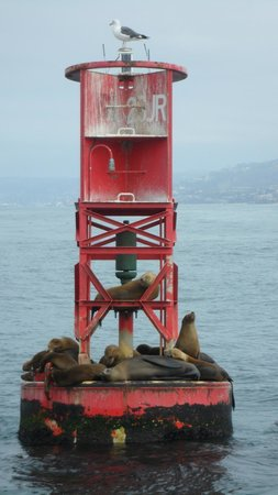 Dana Point, Californien: Sea lions