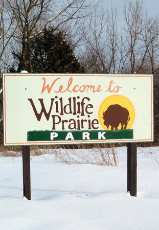 Wildlife Prairie Park: You can stay in a caboose!