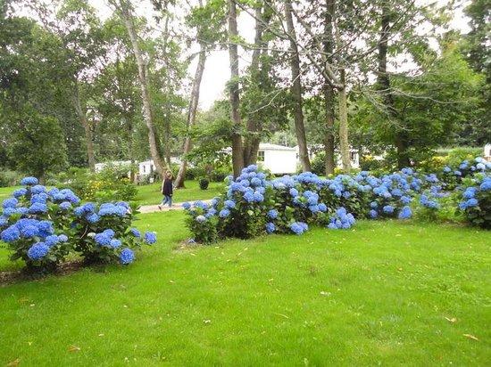 Camping du Domaine de Lanniron : emplacements