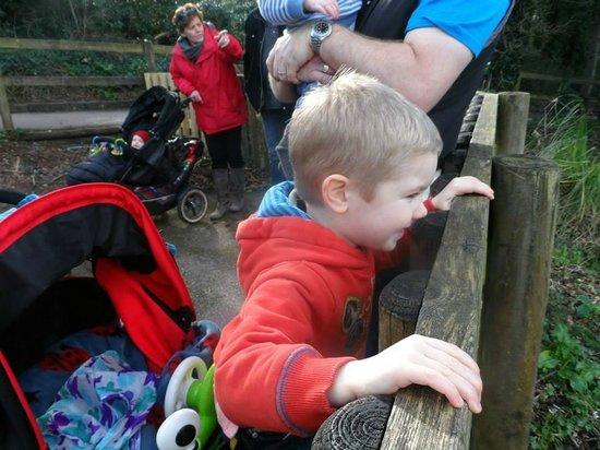 Paignton Zoo Environmental Park: Waiting for the train