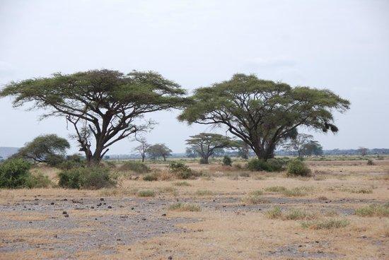 Shu'mata Camp: Pirschfahrt in der Savanne