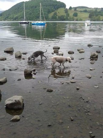 Pooley Bridge Inn: Bill and Alfie in lake Ulswater