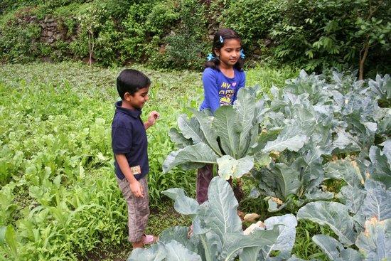 Soulitude by the Riverside: Picking vegetables