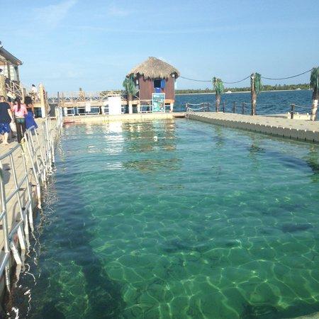 Ocean Adventures Punta Cana - Dr Fish Ocean Spa: Lunch at the shark exhibit