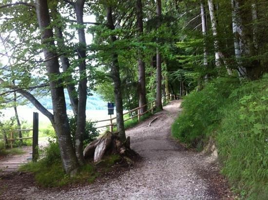 Fuschl am See, Østerrike: тропа