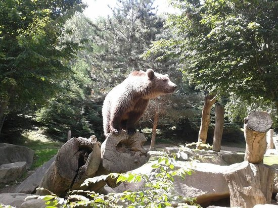 Parc Animalier Des Pyrenees: Ours Brun in the Park