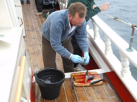 Schooner Stephen Taber Day Cruises: Captain Noah fileting the Fresh caught Mackerel. Right after the Captain had his chefs cook it u
