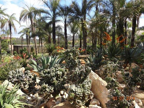 Inhotim : jardim de espécies do deserto