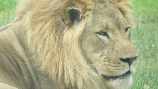 Utah's Hogle Zoo: There is a large lion enclosure