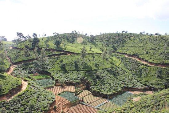 Heritance Tea Factory: View