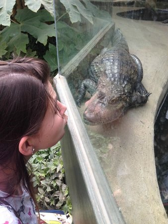 Amazona Zoo: Face off with the friendly Caiman