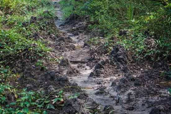 Kota Kinabalu Wetland Centre : Muddy trek back to the entrance