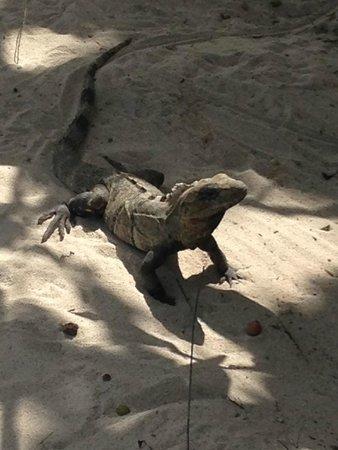 Luxury Bahia Principe Sian Ka'an Don Pablo Collection: Friend at the beach!