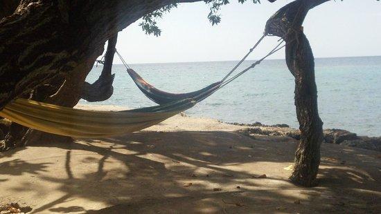 Little Bay Cabins: hammock garden