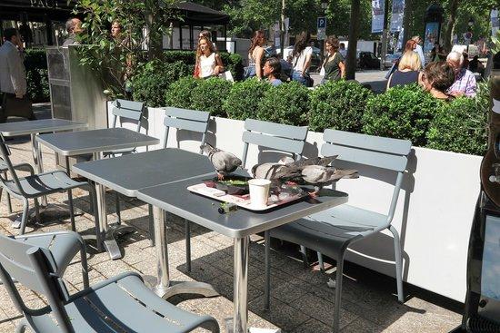 Champs-Elysees: pigeons