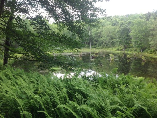 Delaware Water Gap National Recreation Area: Swampy area near a pond