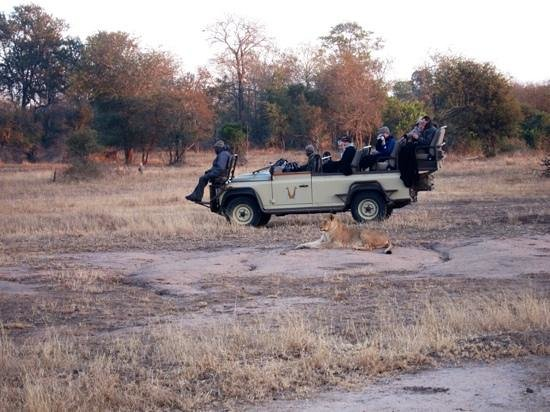 Arathusa Safari Lodge: this wasn't our vehicle (but similar), and shows how close you get to the animals.
