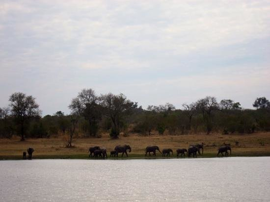 Arathusa Safari Lodge : View from our room's porch of the elephants across the pond.