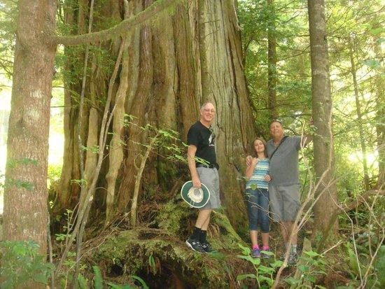 Water's Edge Shoreside Suites: Ancient Cedars walk