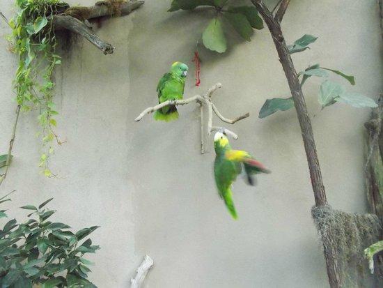 Reptile Gardens: Cute birds