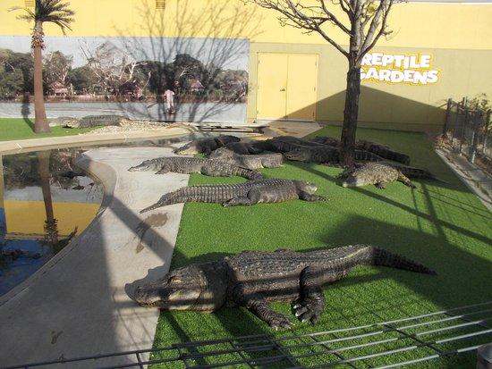 The Boa Under The Dome Picture Of Reptile Gardens Rapid City Tripadvisor