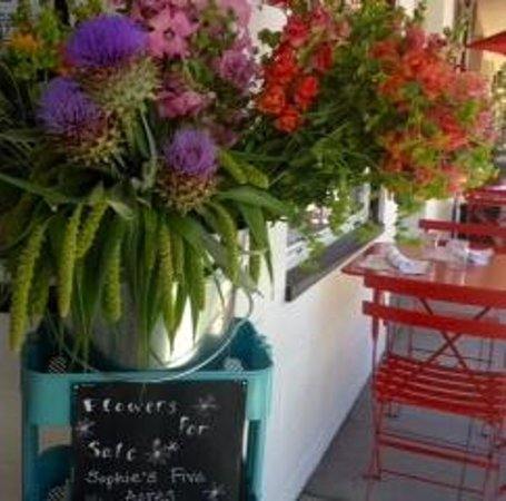 Savvy on First : Fresh Flowers Thursday-Sunday from Sofie's Five Acres