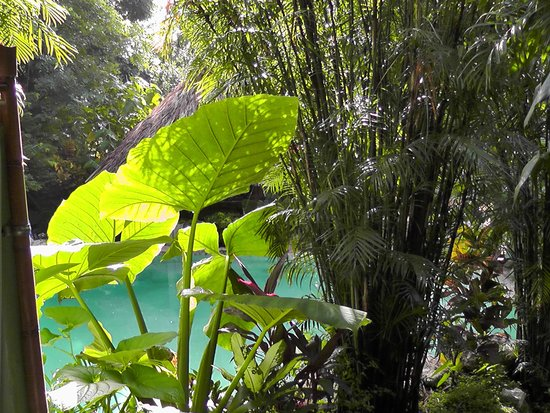 Genesis Eco-Oasis: pool covered with lush plants