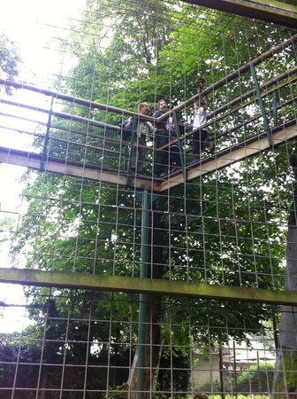 Thrigby Hall Wildlife Gardens: Up high on the tiger tree walk!