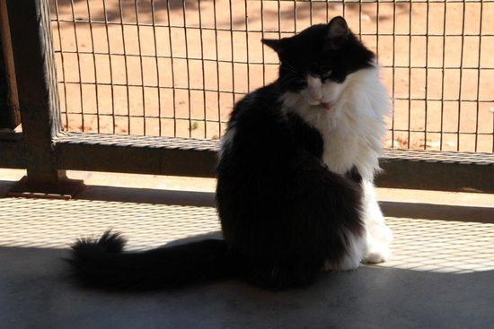 Best Friends Animal Sanctuary : One of the feline residents