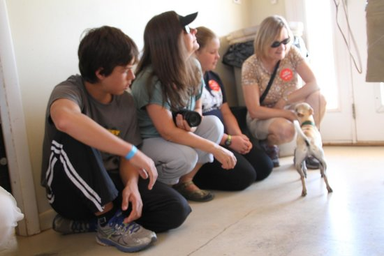 Best Friends Animal Sanctuary : Helping a young chihuahua trust people