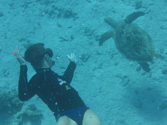 Hyatt Regency Sharm El Sheikh: Плавание с черепахой