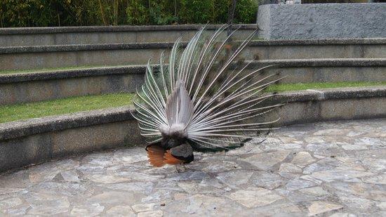 Parque Reina Sofía: Pavo Real en el parque
