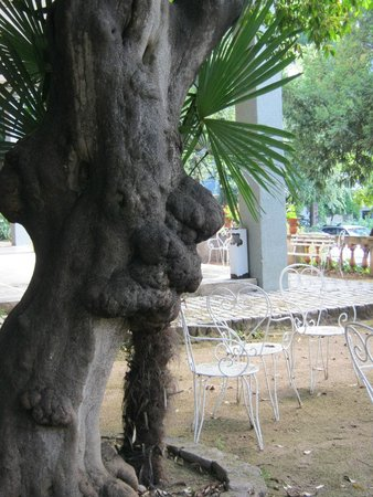Residencia Salesiana Marti-Codolar: somebody's nose)))) in the garden