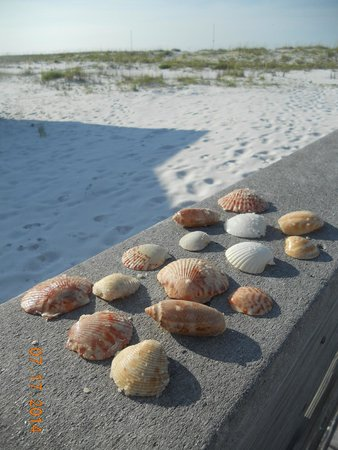Navarre Beach Some Of The Shells We Found On Day 1