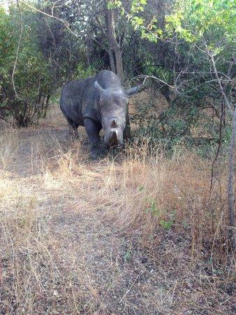 Reserve De Bandia: zo dicht bij een neushoorn