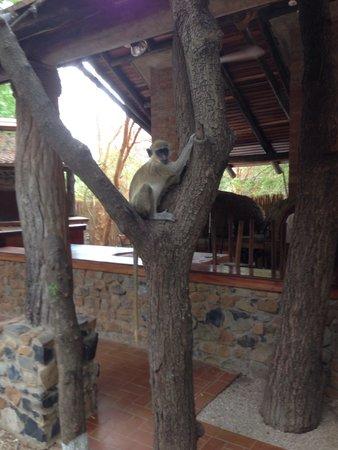 Reserve De Bandia: de aapjes lunchen gezellig mee