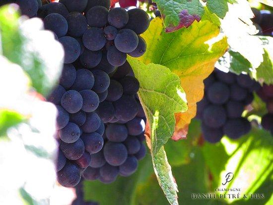 Le Bistro Du Beaujolais: Grapes in Ussac . . . .