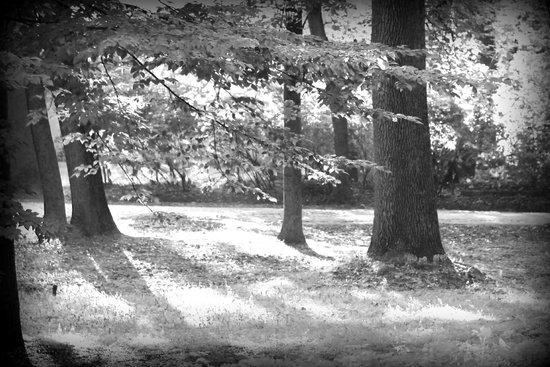 Łazienki-Park (Park der Bäder): солнечно