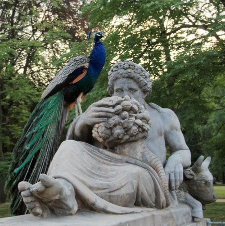 Łazienki-Park (Park der Bäder): павлины спасаются от детей на статуях