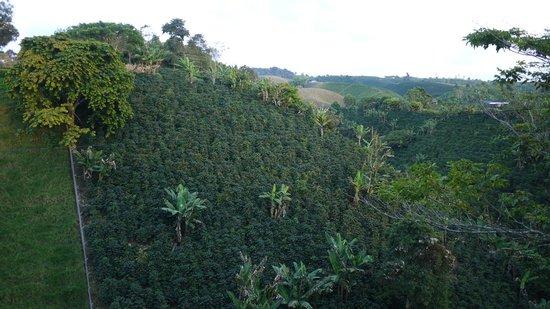 Bosques Del Saman - Alcala : view