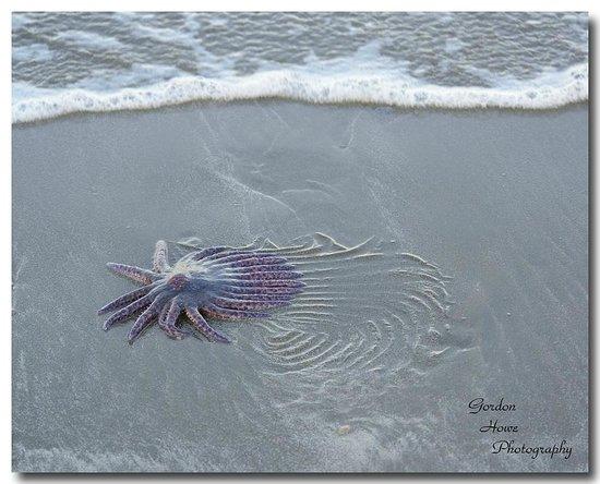 Crystal Cove Beach Resort: Nice beachcombing