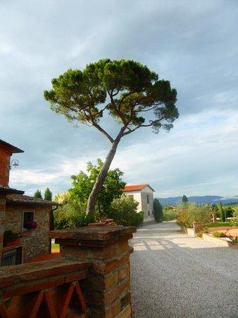 Villa Rosa dei Venti: Looking down the road