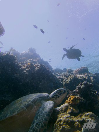 Cocotinos Manado : Lots of turtles around Bunaken