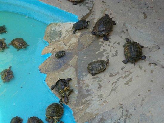 Aquaworld Aquarium & Reptile Rescue Centre: Terrapins