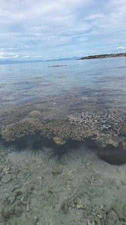 Andilana Beach Resort : fondali
