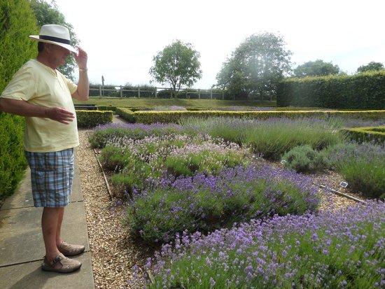 Norfolk Lavender: More lavender